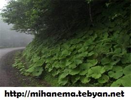 http://mihanma.persiangig.com/image/Gilan/yeylagh.jpg