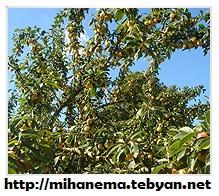 http://mihanma.persiangig.com/image/Golestan/ejtemaee%26eghtesadi.jpg